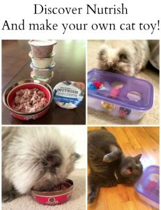 How to Make Your Own Cat Toy and Feed Your Cats Well With Rachael Ray™ Nutrish® Cat Food
